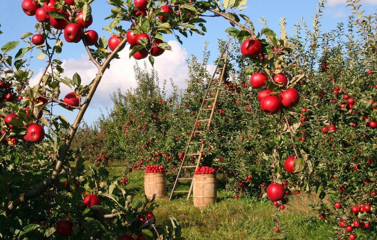 Was sind die besten Apfelsorten