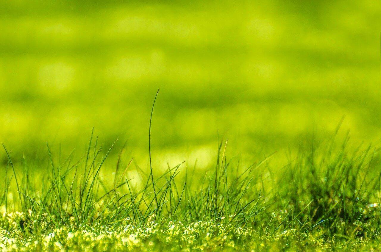 Solange braucht der Rasen zum Wachsen