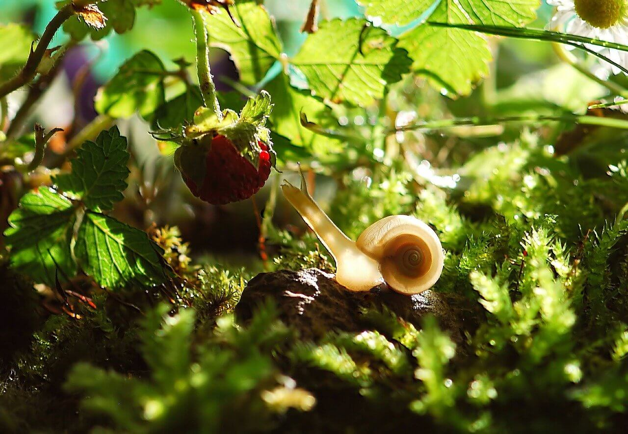Was hilft gegen Schnecken im Garten