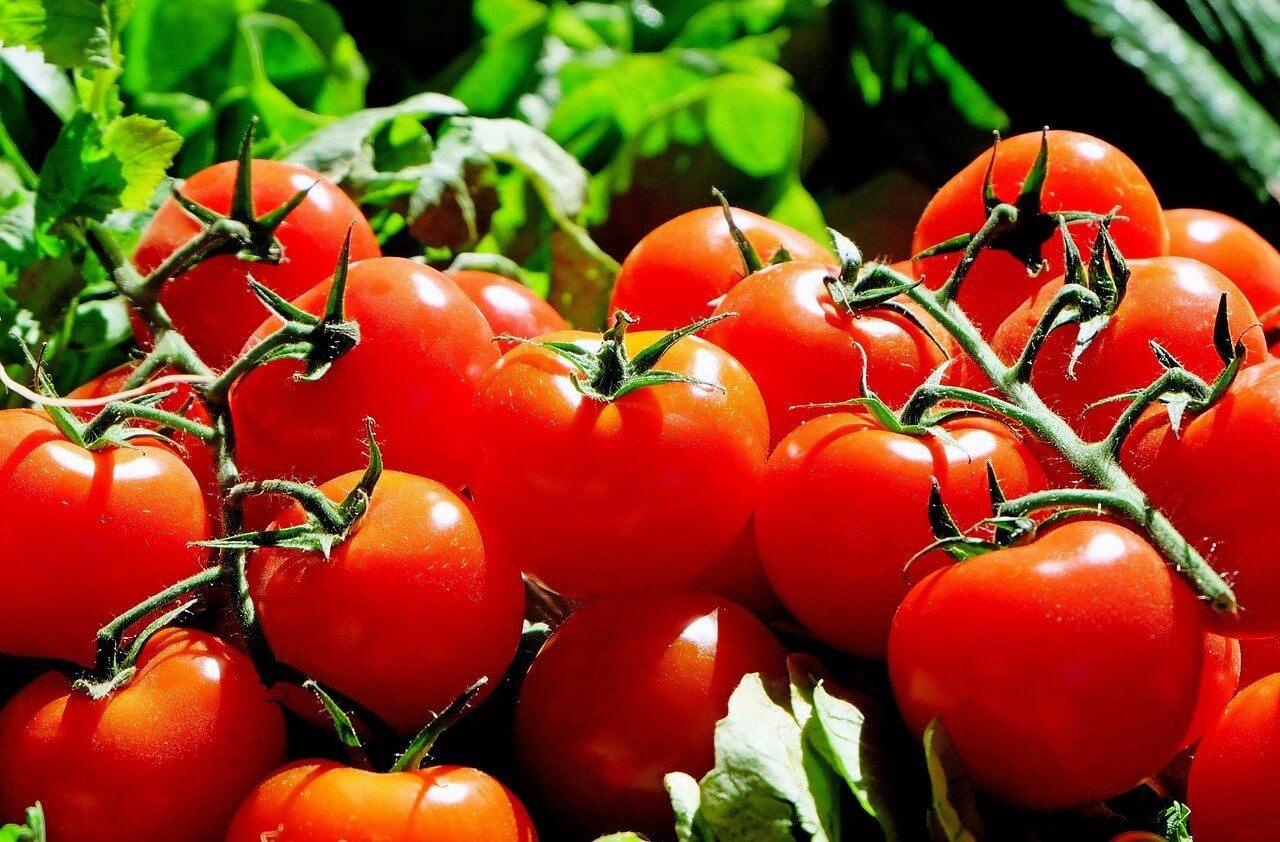 Gurken und Tomaten spritzen