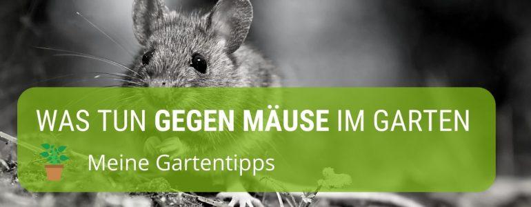 was tun gegen mäuse im garten